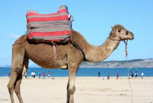 camelbeachreduced
